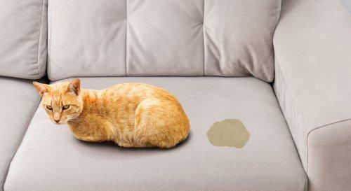 L'astuce imparable pour nettoyer et enlever l'odeur du pipi de chat