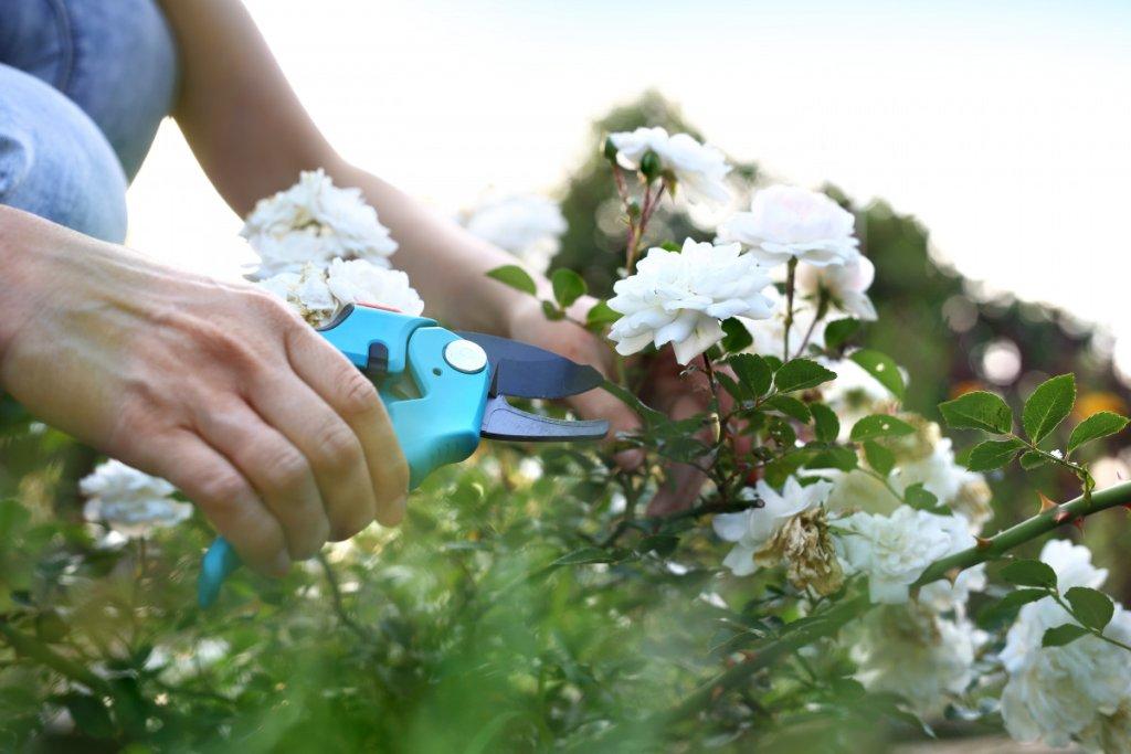 Jardinage - cover