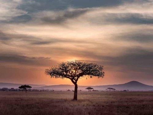 30 AMAZING African Adventures For Your Africa Bucket List