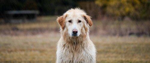 Por qué los perros se asustan con las tormentas y consejos para ayudarles · Maldita.es - Periodismo para que no te la cuelen
