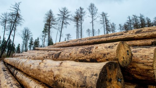 Häuslebauer atmen durch Warum der Holzpreis wieder krachend einbricht
