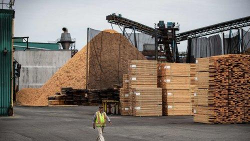 Baustoff-Engpässe Holzpreis in den USA um 40 Prozent eingebrochen