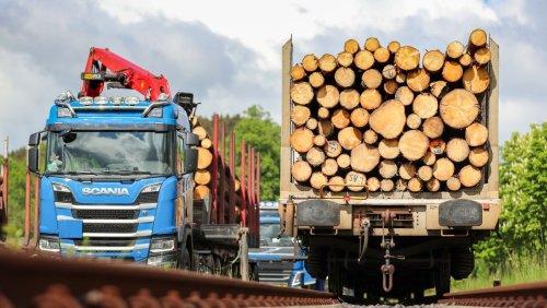"""Holzpreise in Deutschland """"Der deutsche Wald wird leergekauft"""""""