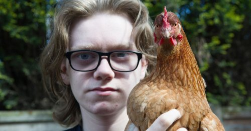 Boy, 15, 'devastated' as he's told to get rid of pet chickens