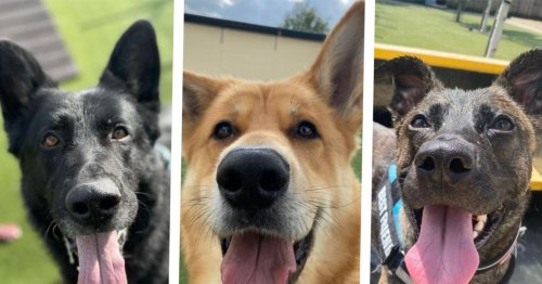 17 gorgeous dogs looking for a forever home in Greater Manchester right now