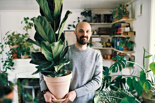 Guide to Indoor Plants: 30+ House Plants That Are Almost Impossible to Kill | Man of Many