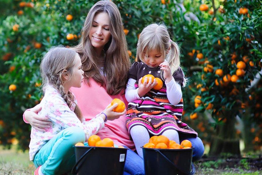 28 Spots for Best Family Fruit Picking Near Sydney