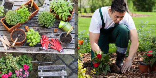Free online resources to help you get better at growing plants at home