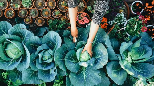 The 10 best gardeners to follow if you're a beginner