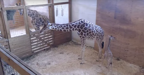 Now you can name April the giraffe's baby and everyone has the same idea