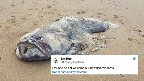 A horrifyingly massive fish washed up on a beach in Australia