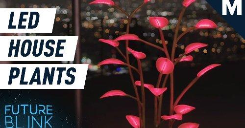 LED House Plants
