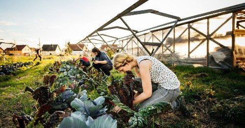 Food and climate change: 'There's a lot of unlearning that needs to happen'