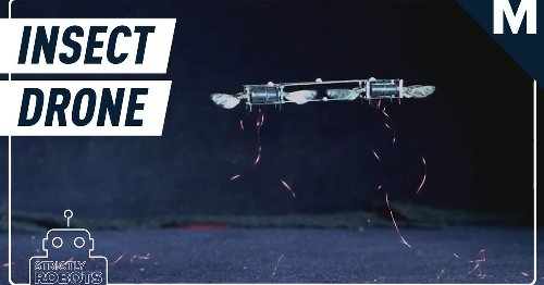 Don't panic, but 'insect drones' exist now
