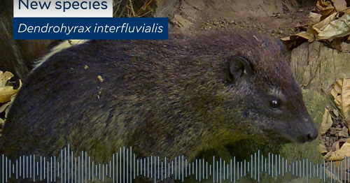 Scientists discovered a new mammal. Hear its haunting bark.