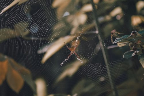 Scientists record the sound spiderwebs make, and it's eerie as hell