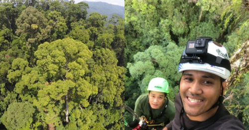 World's tallest tropical tree found in Malaysia. But how tall is it?