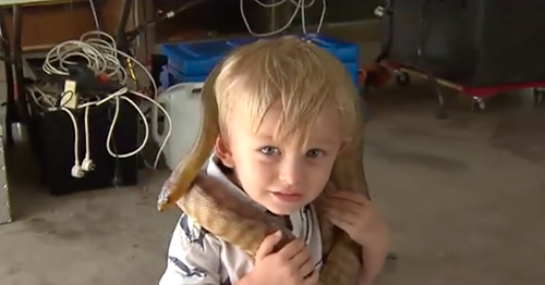 Tiny human snake catcher has a glorious and terrifying career ahead of him