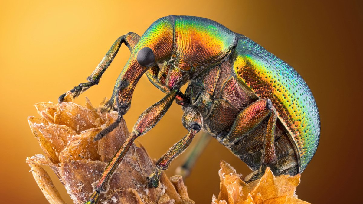 Microscopic photos show the hidden beauty of an invisible world