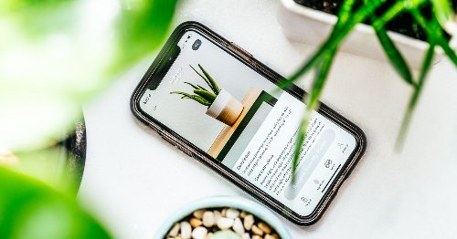 7 apps to keep your plants alive and well