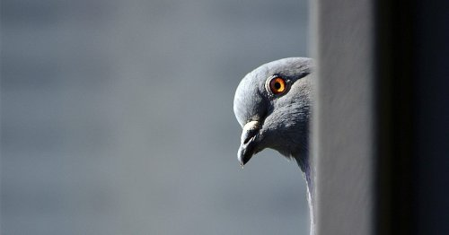 Birds might be conscious and self-aware like humans, groundbreaking study finds