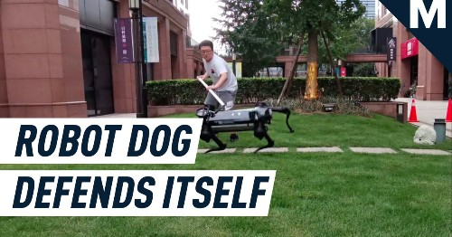 Watch this robot dog teach itself to fend off humans