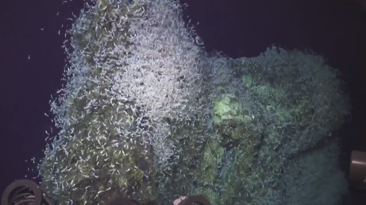 Watch an earthquake startle a swarm of deep sea creatures