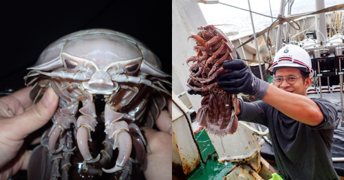 Researchers discover 'sea cockroach' species in Indonesia and it's pure nightmare fuel