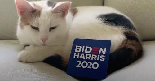 Joe Biden and Kamala Harris enlist cats to help them defeat Trump