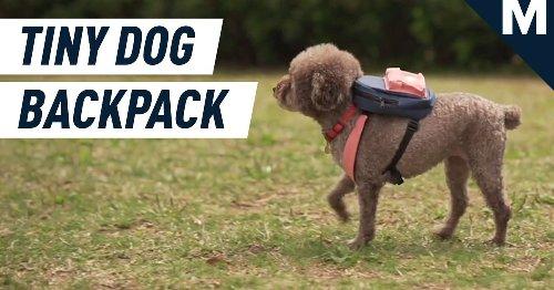 Tiny Dog Backpack