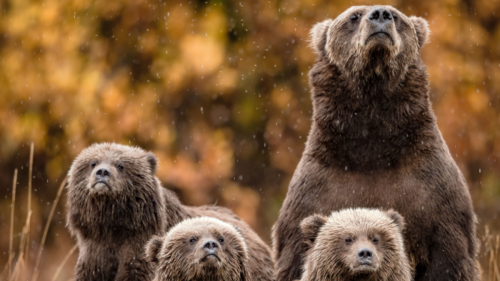 Stop messing with bears in national parks