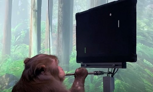 Neuralink Video Reveals Monkey Playing Pong Using Only His Mind