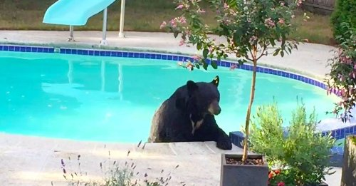 Bear has tough day, unwinds in hot tub