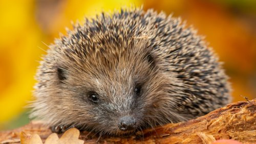 How A Hedgehog Led To A McFlurry Cup Design Change