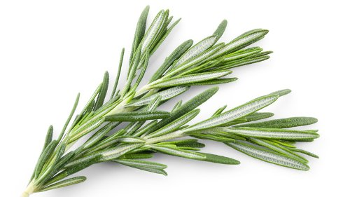 Everything You Need To Know About Rosemary