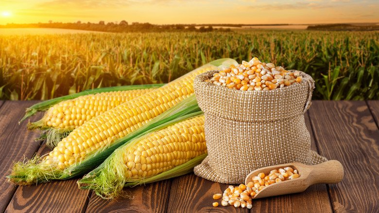 The Smart Hack To Butter Corn On The Cob