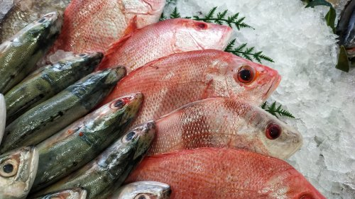 Don't Take One More Bite Of Fish Until You Read This