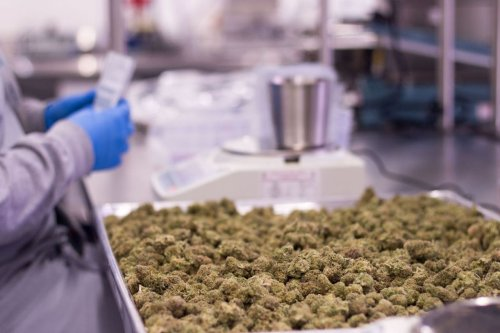 Why the Massachusetts cannabis industry remains primarily white and male