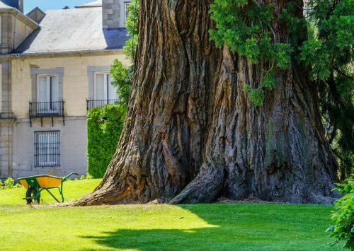 7 places where you can admire towering sequoias in Europe