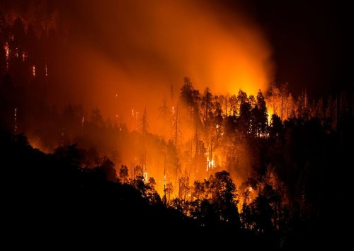 Wildfire closes Sequoia National Park and threatens world's largest tree