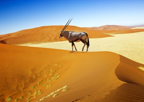 Namibia is the most underrated outdoor destination in Africa