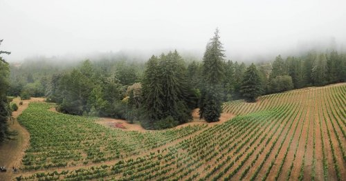 How forest bathing helped me find a new sense of peace in California wine country