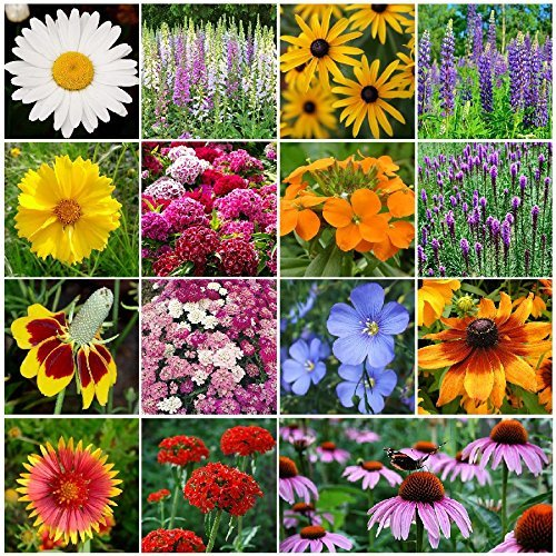 Perennial Wildflower Seed Mix