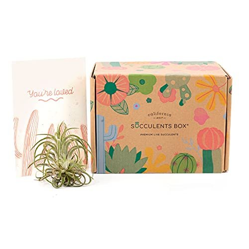 15% discount on your first air plant box