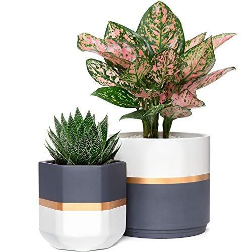 Geometric ceramic planters