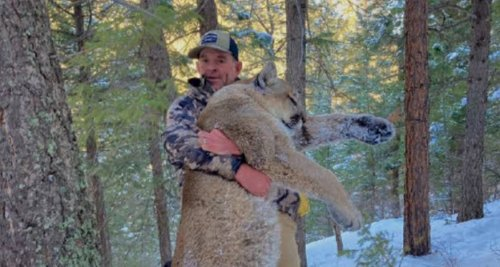 Alleged Capitol Insurrectionist To Be Detained For Illegally Shooting Mountain Lion