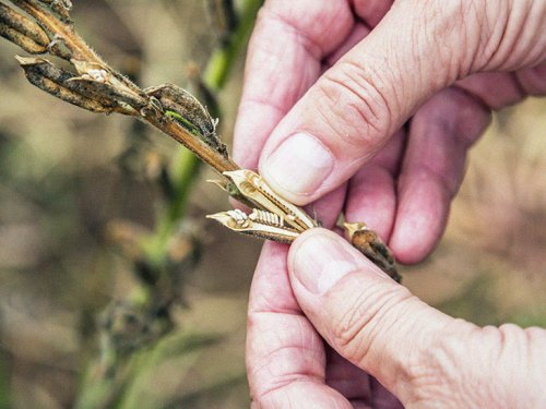 Sesame seed extract shows promise for Parkinson's