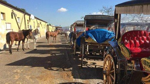 İBB'nin MHP'li Belediyeye Verdiği Atlar Kayıplara Karıştı