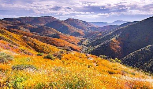 Where To Explore California's Spring Wildflower Bloom