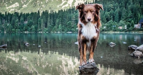 The Best Dog Gear for Summer Adventures